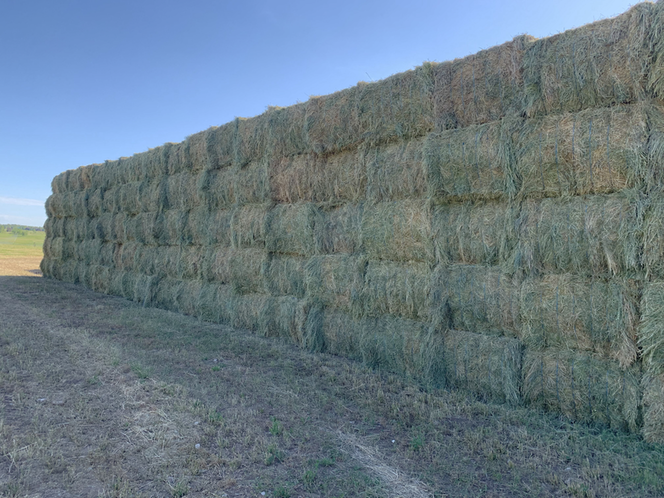 hay prices